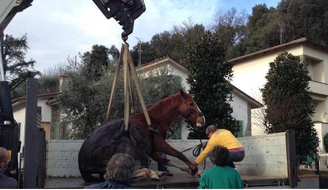cavallofratturato