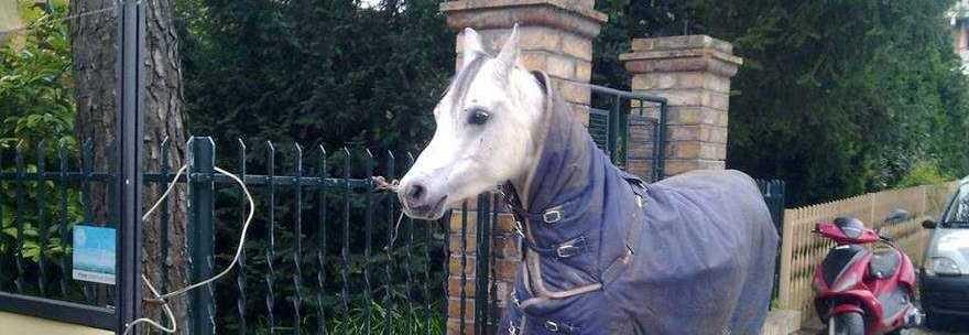 cavallotilt