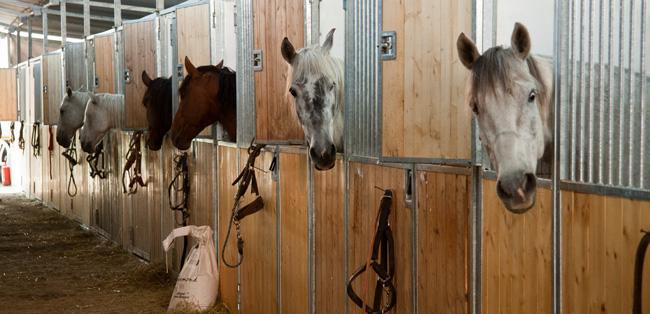 cavalloscuderie