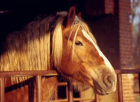 cavallomaltrattamenti