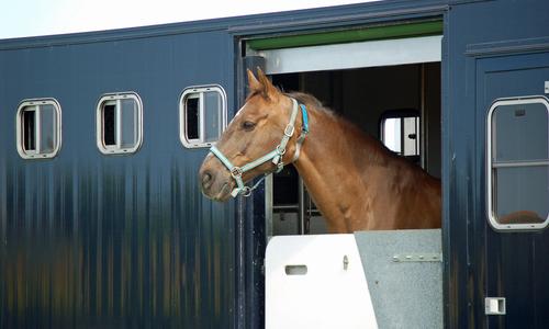 cavallobox