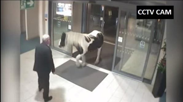 Cavallo Entra in una Stazione si Polizia