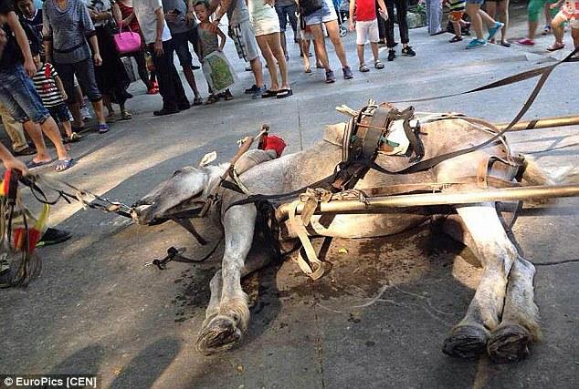 Cavallo Muore Shenzhen Safari Park Cina