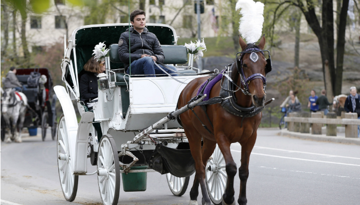 i cavalli di Central Park