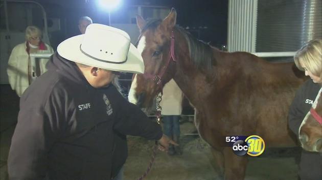 Abbandono Cavalli Siccita California