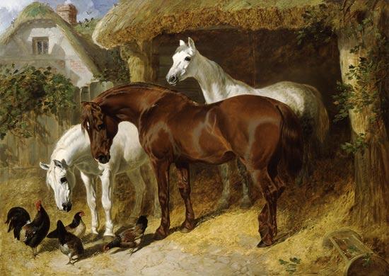 Ritrovati Un Cavallo Anatre E Anguelle In Case Occupate Abusivamente A Milano