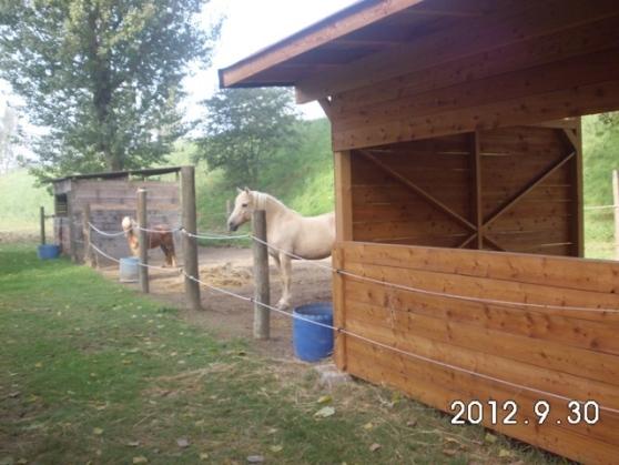 Cavallo abbattuto con un colpo di arma da fuoco a Borgiallo