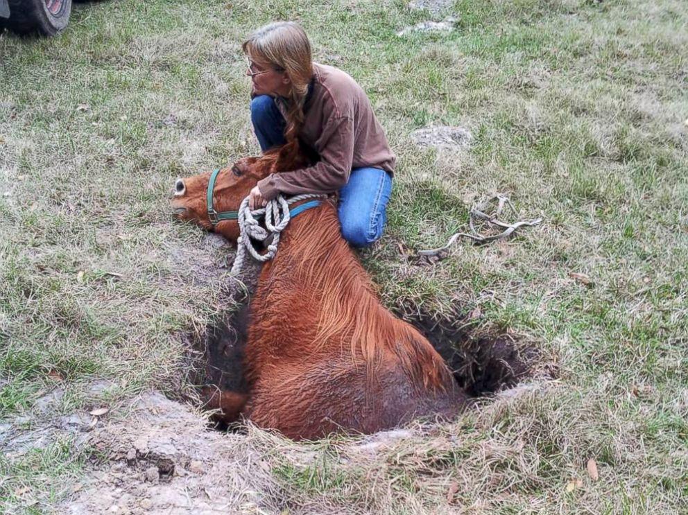Cavallo cade in una voragine in Florida