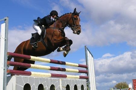 Dopa il suo cavallo per una corsa a ostacoli: squalificato e indiziato