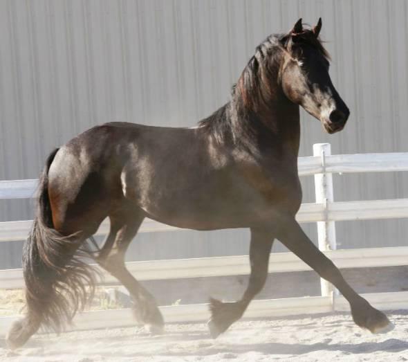LItalian Horse Protection propone la donazione per i cavalli maltrattati