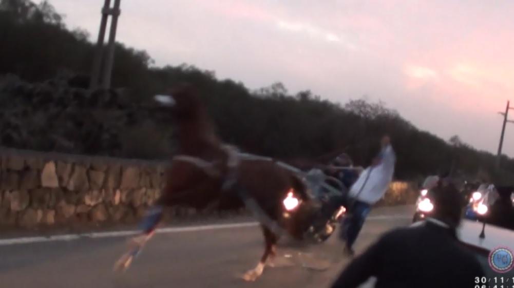 Sull'Etna gare clandestine di cavalli