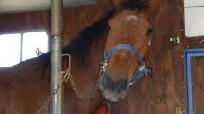 Uirapuru: salvato dal macello è destinato alla pet therapy