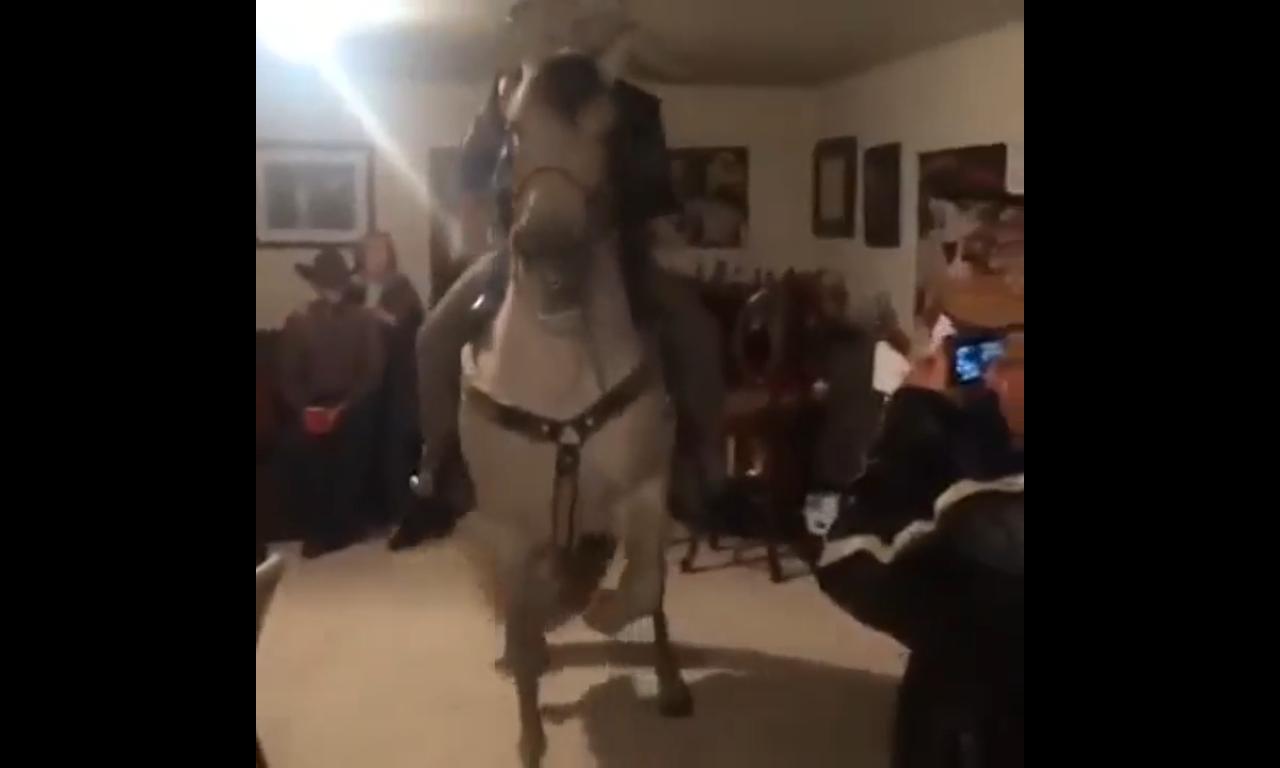 Porta Un Cavallo In Una Stanza Ed è Subito Fiesta