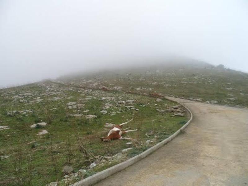 Cavalli morti nella valle dello Jato