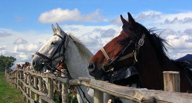 I cavalli possono comunicare attraverso lo sguardo e il movimento delle orecchie