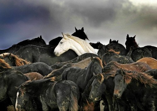 I cavalli sono metereopatici