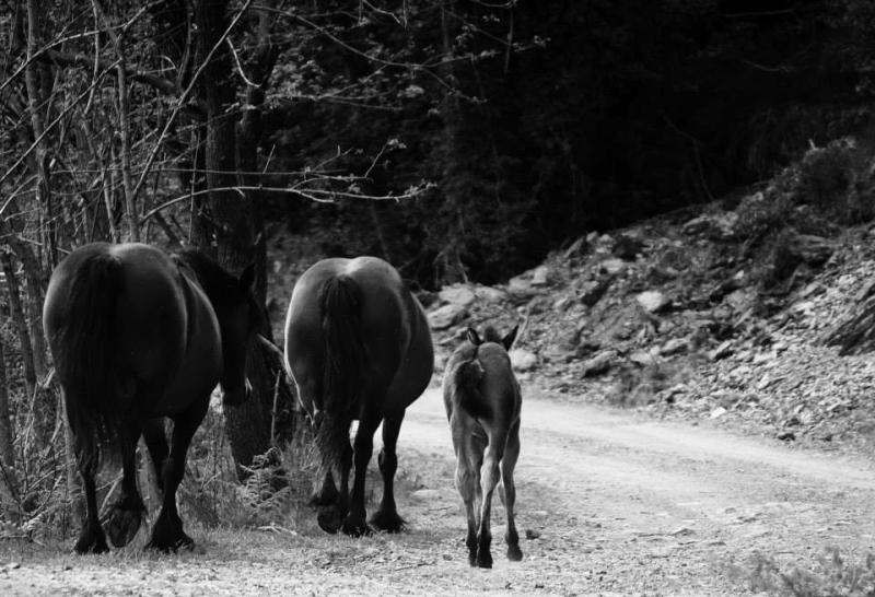 """Il concorso """"I cavalli selvaggi e i Tesori del Parco dell'Aveto"""" è terminato"""