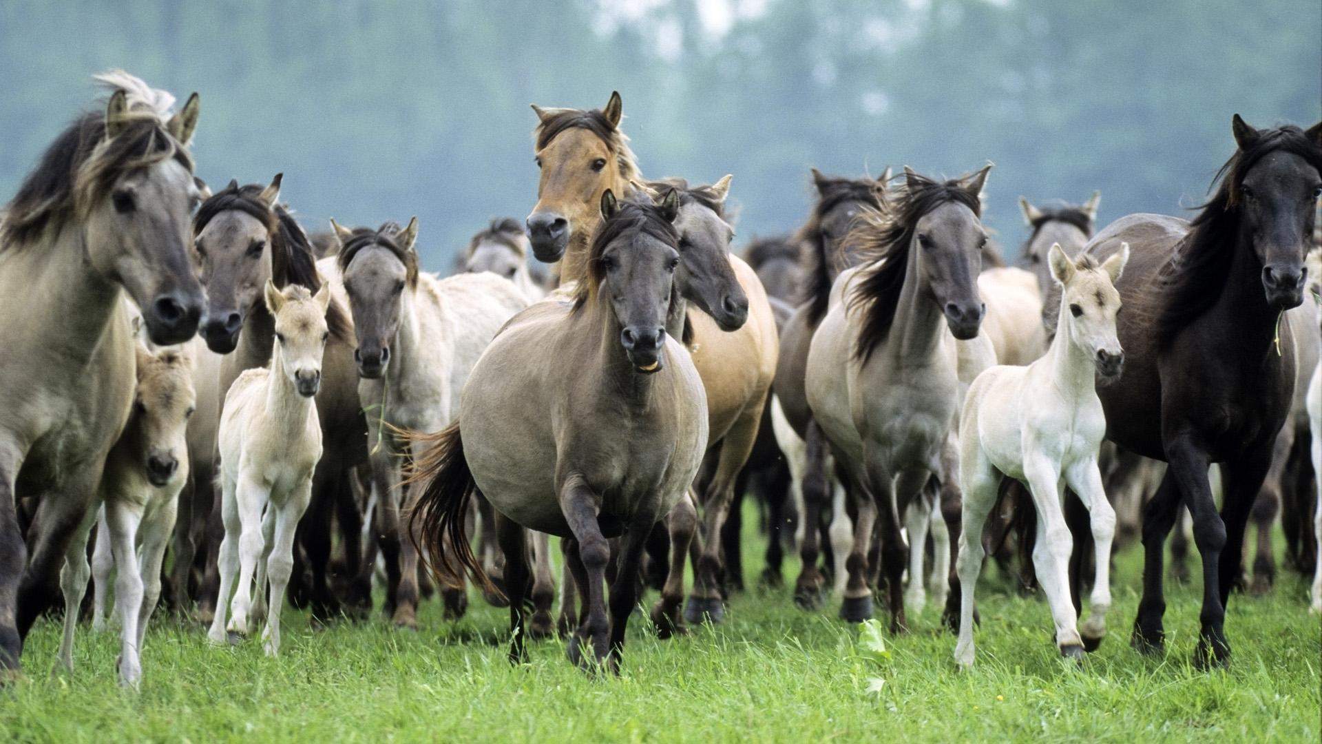Il sistema sociale nella mandrie di cavalli: un sistema complesso e dinamico
