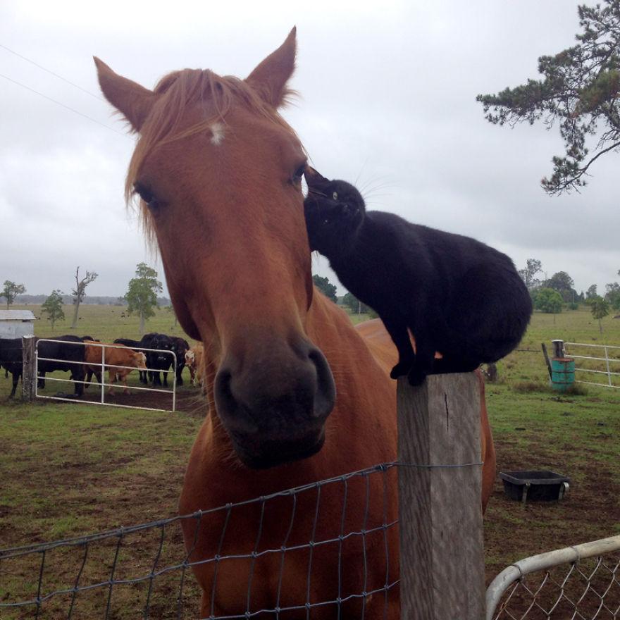 Morris e Champy amici per la pelle: un gatto e un cavallo inseparabili
