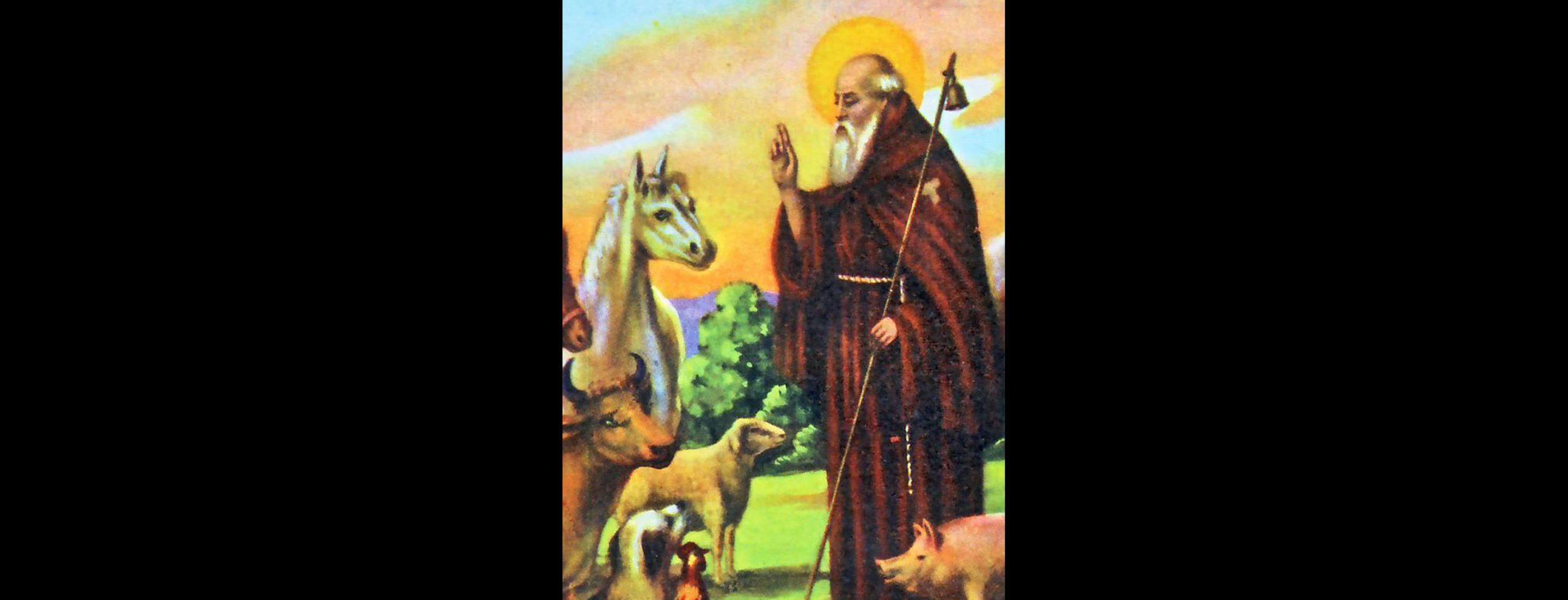 Per Sant'Antonio Abate benedizione di cavalli a Montebandoli e Fucecchio