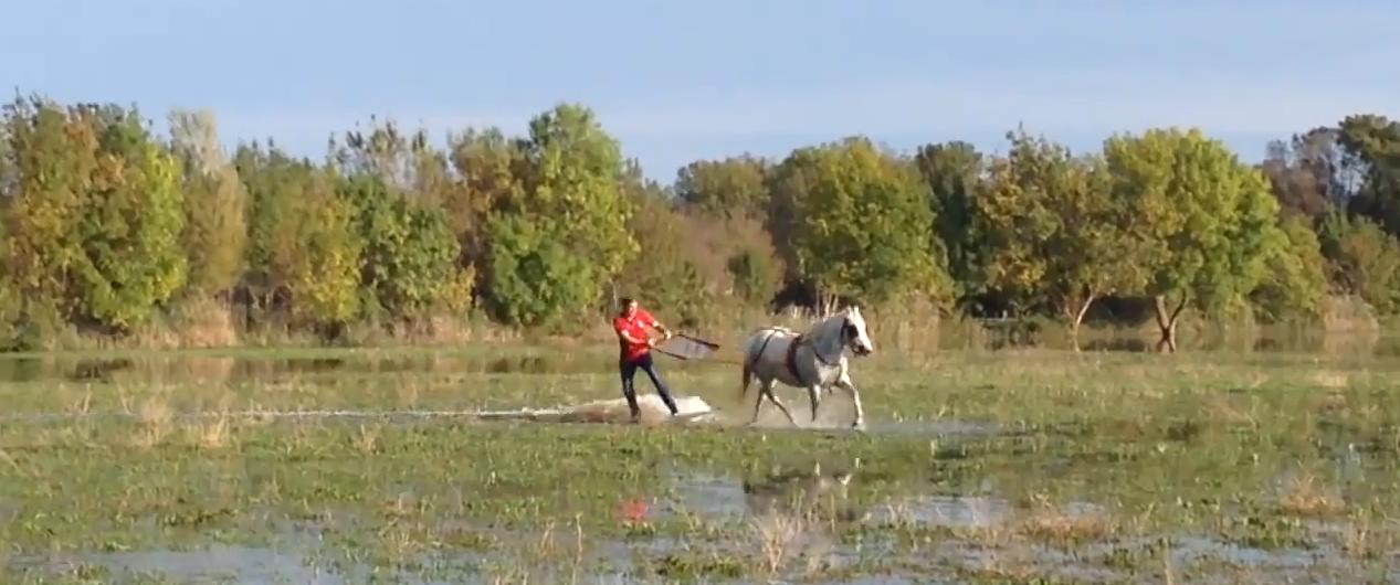 Uomo fa surf trainato da un cavallo