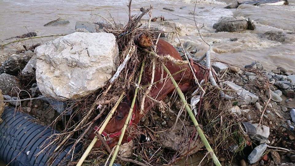 Carcassa Di Cavallo Ad Agropoli