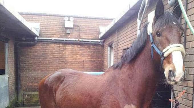 Caso nazionale per il cavallo baio di nome Brian che avrebbe un nome troppo poco bellicoso per la polizia inglese