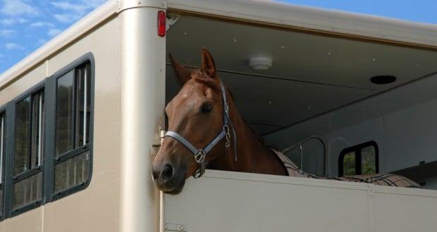 Hotel per cavalli nell'aeroporto di Liegi