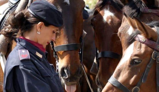 Quindici cavalli della polizia di stato potranno essere adottati gratuitamente