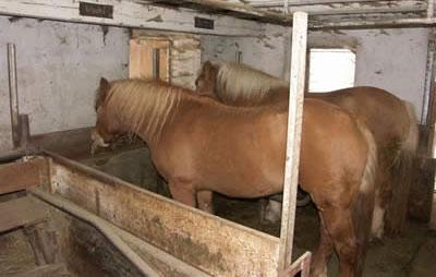 Sequestrati 52 cavalli nel salernitano: erano tenuti in condizioni precarie e non a norma