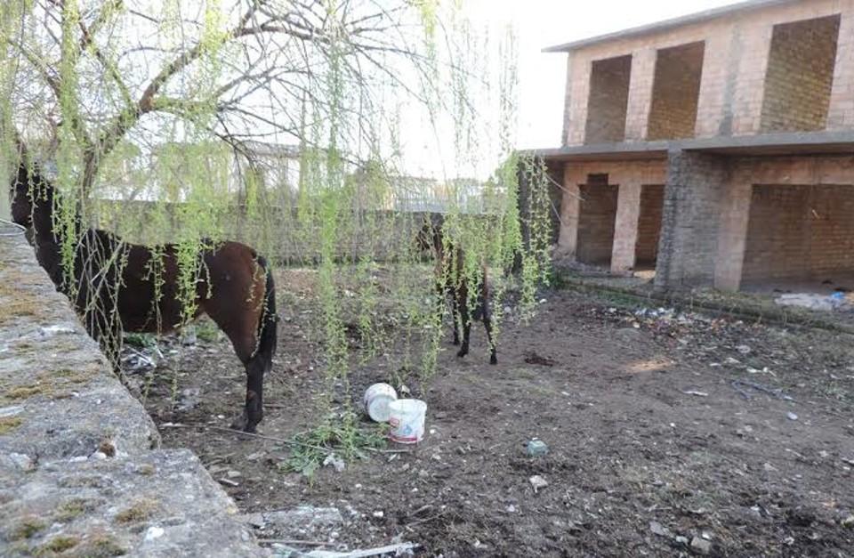 Cavalli e cani mantenuti all'interno di una discarica: denuncia per il proprietario
