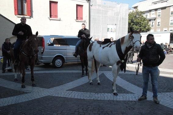 Il cavallo va al funerale del suo padrone