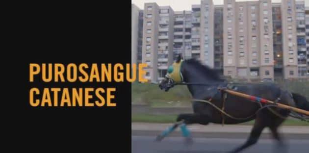 Le corse illegale dei cavalli a Catania