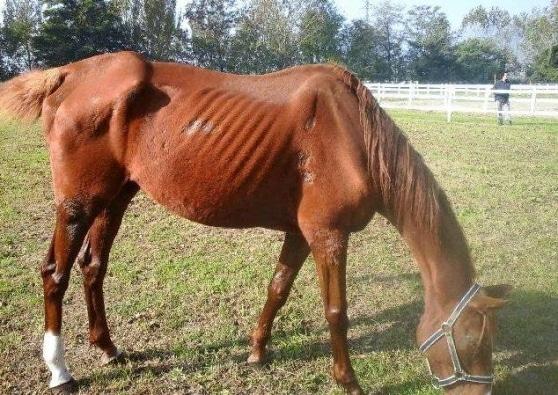 Cavalli maltrattati: quattromila euro di multa