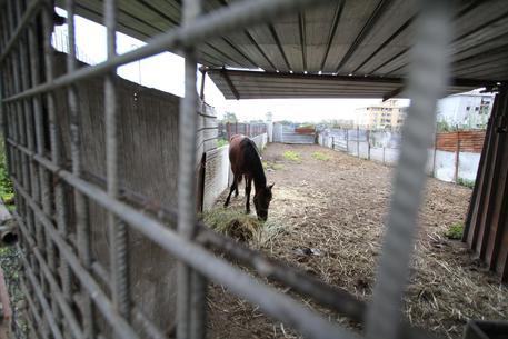 Corse di cavalli e camorra: otto le persone arrestate