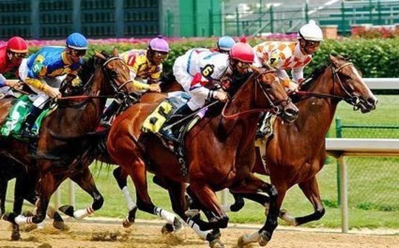 Due uomini denunciati per aver dopato un cavallo in una corsa