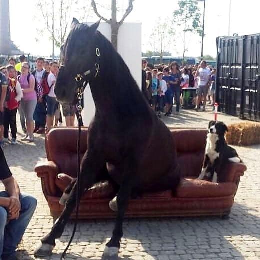 Expo e il cavallo stanco seduto sul divano