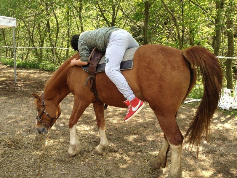 L associazione Tarpan e il lavoro con i cavalli per aiutare gli uomini
