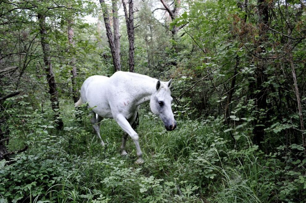 """""""La collina dei cavalli"""": il primo parco equino d'Italia"""