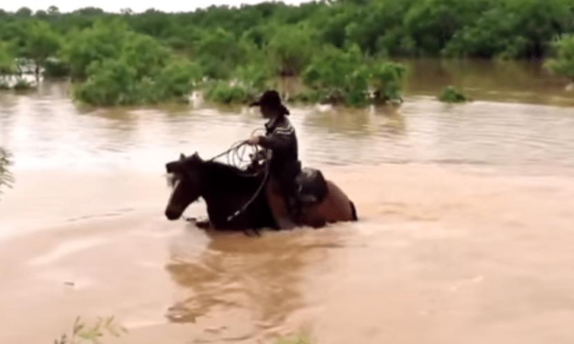 Un fiume in piena travolge 31 cavalli; il proprietario, con i suoi tre figli, li salva tutti