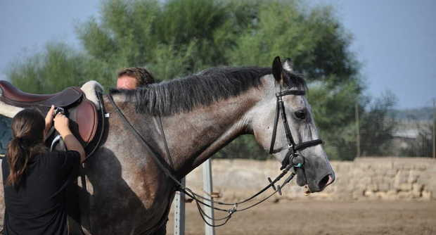 A Catanzaro è morto un bambino di nove anni per il calcio di un cavallo