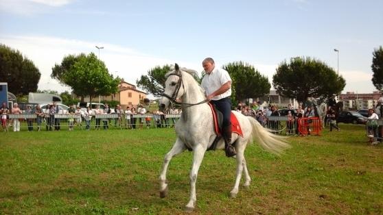 Allo Smile Park grande attenzione per l'esibizione dei cavalli andalusi
