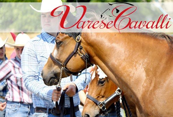 Appuntamento dal 19 al 21 giugno con Varese cavalli all ippodromo delle Bettole