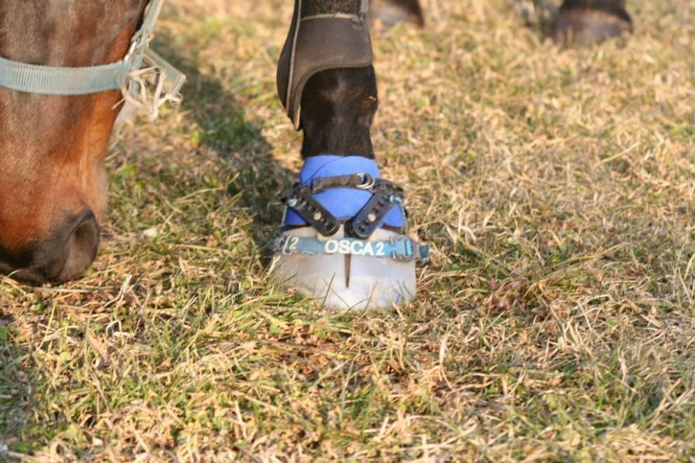 Arrivano le scarpe per cavalli made in Italy