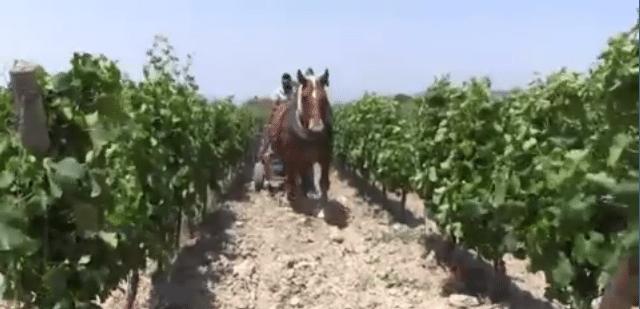 Cavalli,oche e pecore nella filosofia BioIntegrale dell'azienda Olianas
