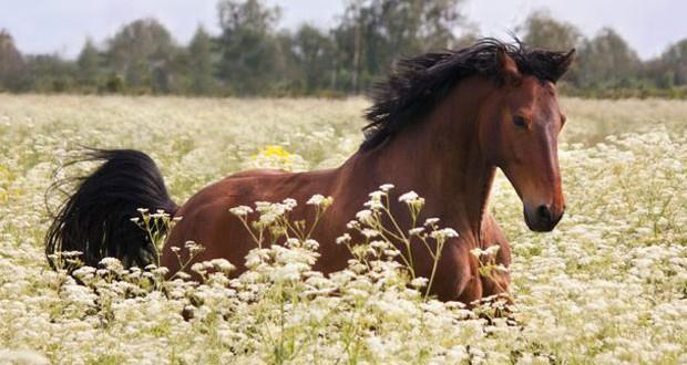 Cavallo rubato ritrovato in una buca con una zampa rotta