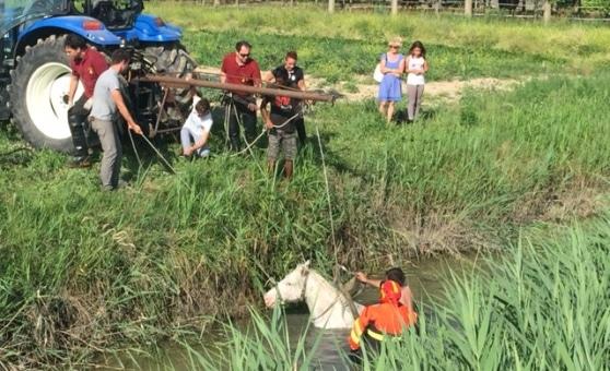 Cavallo salvato da un canale nel veneziano