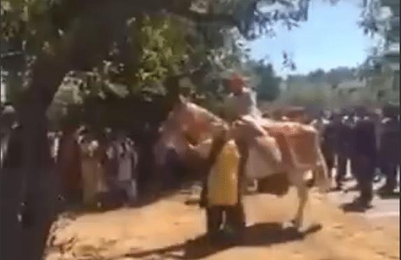 Cavallo imbizzarrito fa cadere lo sposo a terra