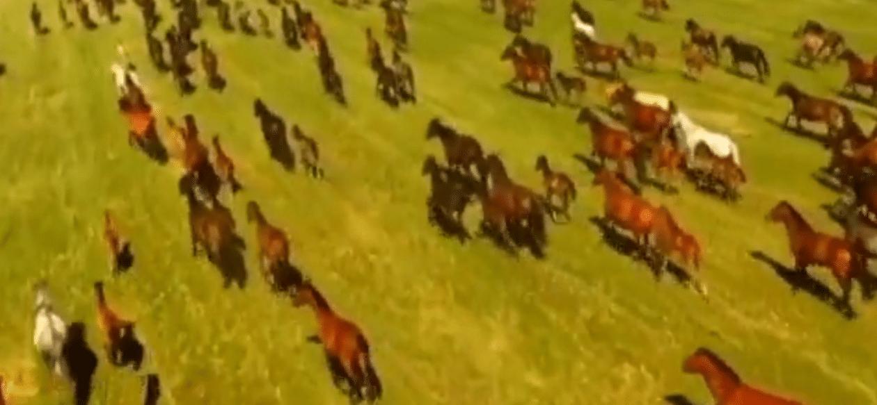 Cina: dicimilaca cavalli al galoppo contemporaneamente