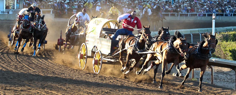 Calgary Stampede: due cavalli soppressi, gli ultimi di una lunga serie